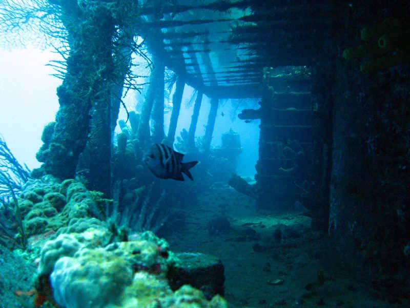 Standard Service - Diving the Lesleen M Wreck