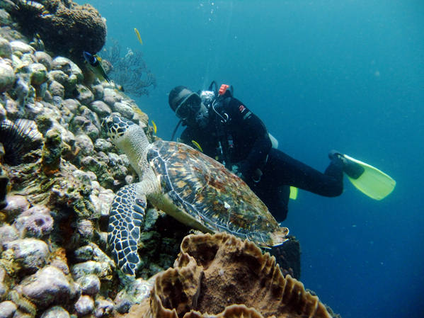 Turtle diving St. Lucia