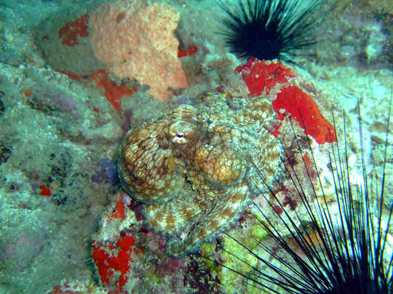 View sea life on PADI cerftified diving courses in St. Lucia